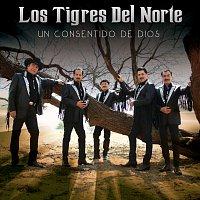 Los Tigres Del Norte – Un Consentido De Dios