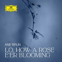 Ane Brun – Lo, How a Rose E'er Blooming