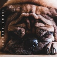 Přední strana obalu CD Songs for Home Alone Dogs, N2
