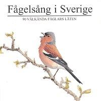 Fagelsang i Sverige