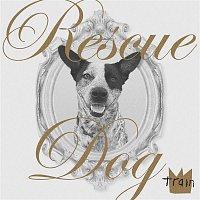 Train – Rescue Dog