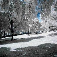 Radomír Holeček – Sněží