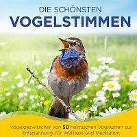 Naturklang – Die schonsten Vogelstimmen - Vogelgezwitscher von 50 heimischen Vogelarten zur Entspannung, fur Wellness und Meditation - Der Klang aus der Natur - Folge 1