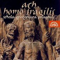 Přední strana obalu CD Ach, homo fragilis