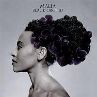 Malia – Black Orchid
