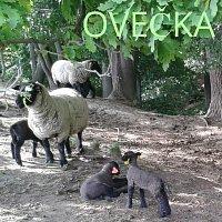 Tuláci – Ovečka