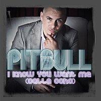Pitbull – I Know You Want Me (Calle Ocho)