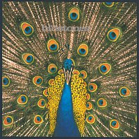 The Bluetones – Expecting To Fly