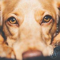 Přední strana obalu CD Songs for Home Alone Dogs, N1