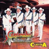 Cardenales De Nuevo León – Espejo De Cantina