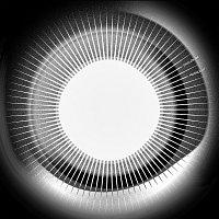 Disclosure – Moonlight