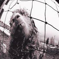 Pearl Jam – vs. Expanded Edition (3 Bonus Tracks)