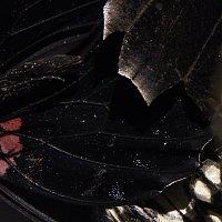 Múzeum motýlích krídiel