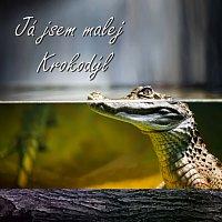 Zdeněk Harant – Já jsem malej krokodýl (I am small Crocodile)